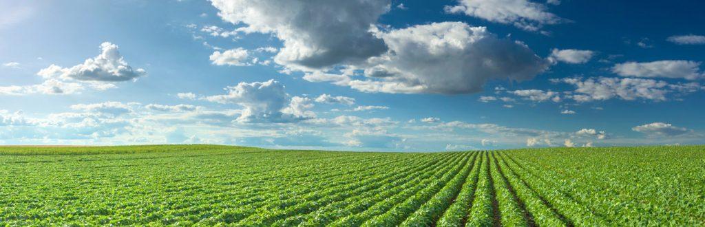 NF Validation : nos méthodes certifiées dans le domaine agroalimentaire